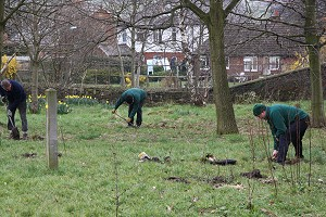 Planting near the old canal arm