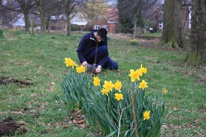 Daffodils looking great