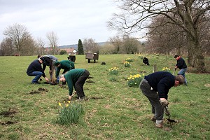 All hands planting wildflowers