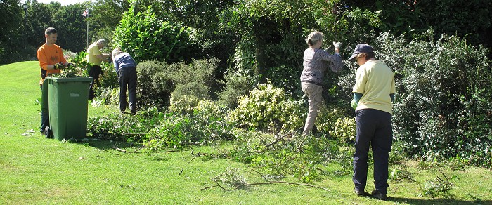 Shrub bed pruning in Marple Memorial Park