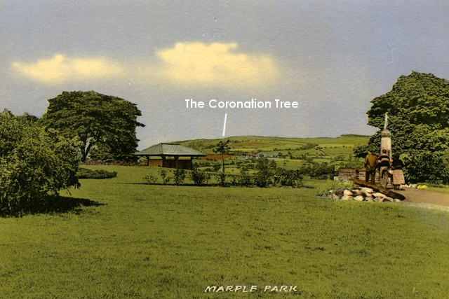 Postcard showing Coronation Tree