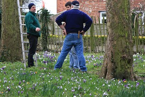 Debate amongst the crocuses